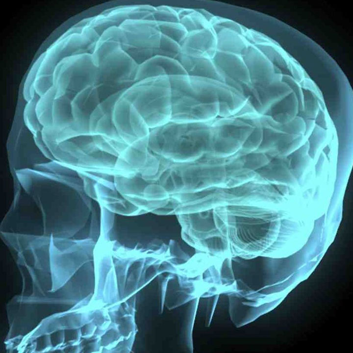 楽しみとなる趣味を持つことは脳にも好影響